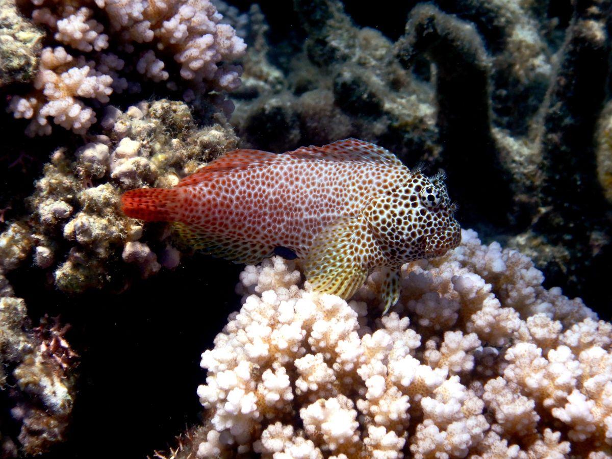 colourful-fish